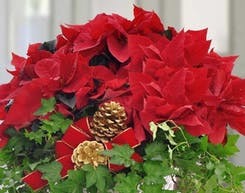 Holiday Plants & Wreaths