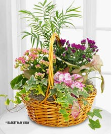 Send an assortment of bright, beautiful flowering plants to someone special.