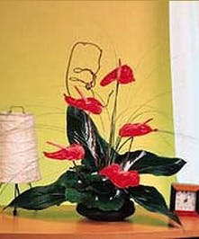 This natural, tropical wonder features Anthurium blooms in a stylish design.