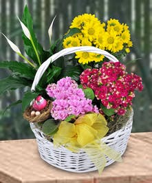 Potted plants grouped together in a nice wicker basket are perfect for any occasion.
