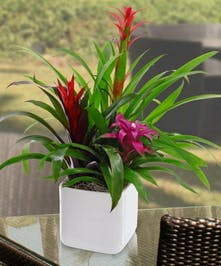 These hardy tropical plants are a must-have for any plant lover!