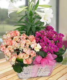 A special basket full of assorted plants, designed with a lovely Easter Lily.