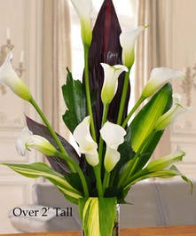 Stand out in the crowd with these majestic Callas.