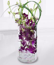 An exotic design of purple Dendrobium Orchids