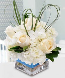 Welcome a special baby boy with this cube arrangement filled with hydrangea, sweet roses and dancing fancy greens. A perfect blue ribbon completes this arrangement!