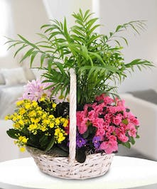 A wicker basket full of bright, beautiful blooms perfect for any occasion. A very colorful array of plants and greens will brighten their day.