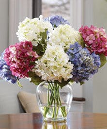 These clusters of beauty feature lush Hydrangea imported from Holland