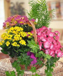 Blooming Garden Baskets from Beneva Flowers