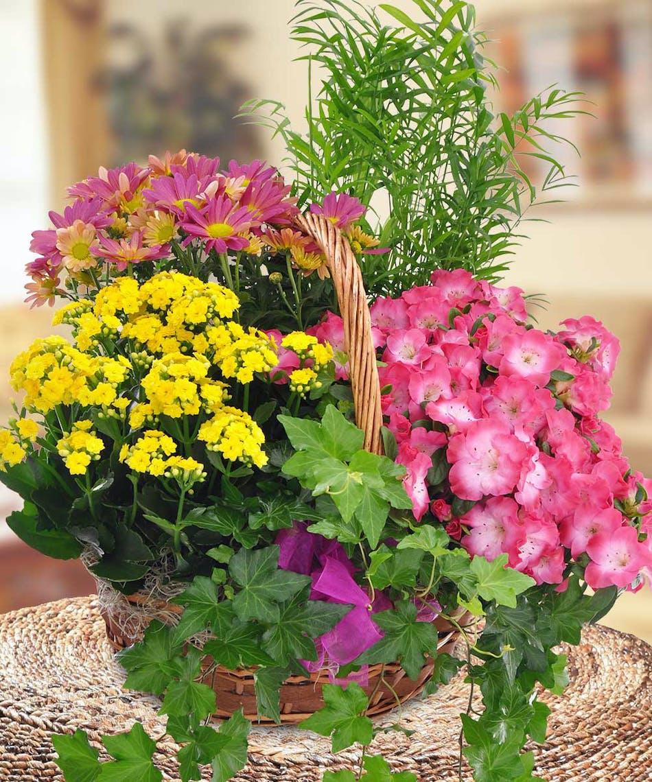 Blooming Garden Baskets from Beneva Flowers