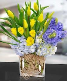 Vivid Tulips, Vibrant Daffodils, Hydrangeas and Hyacinth