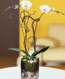 Our collection of exotic orchids reflect the beauty and tranquility of Siesta Key, Florida