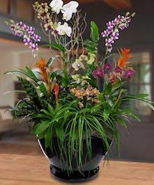 Spectacular Blooming Garden