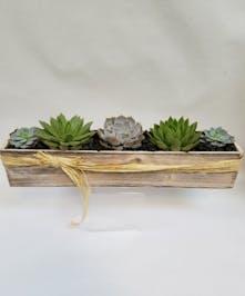 Succulent Supreme