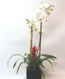Tropical Orchid Garden