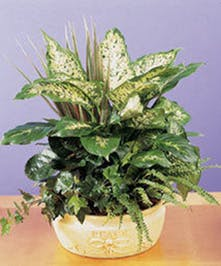 An assortment of green plants, easy to care for!