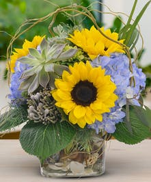 Stunning sunflowers and delightful succulents
