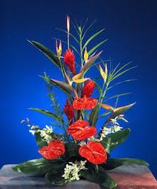 A masculine, sleek tropical design