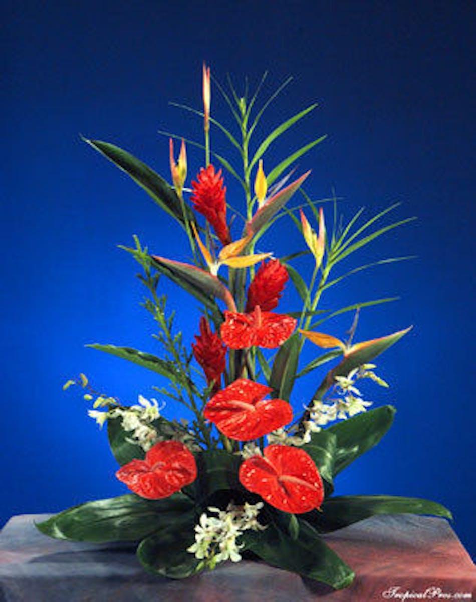 Miami vice tropical floral arrangements beneva delivery conditions reward points izmirmasajfo