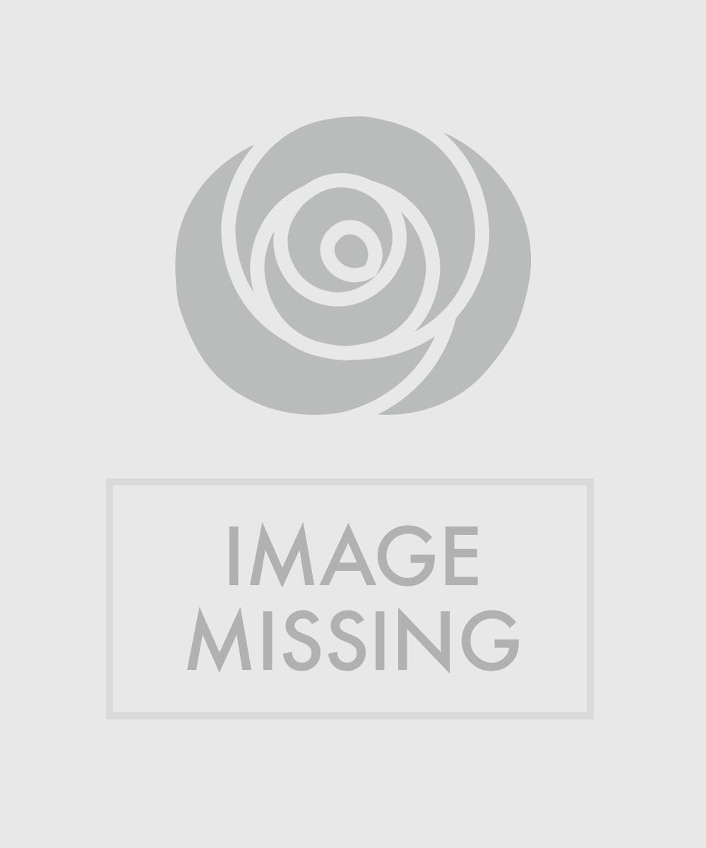 Bird Of Paradise Flower Delivery