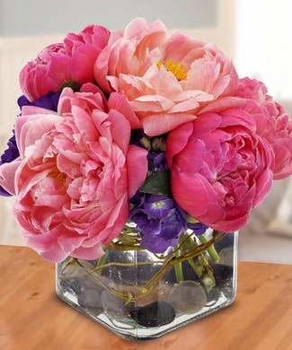 Peonies from the Field