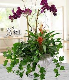 Orchids & Ivy Garden
