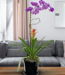 Deluxe Orchid & Bromeliad Combo