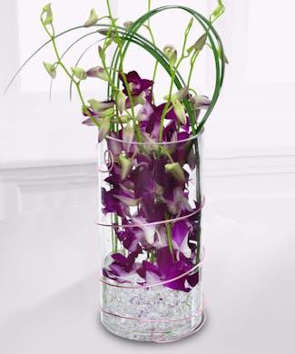 Dazzling Purple Dendrobiums