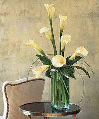 Calla Lilies in Bloom