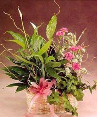 Blooming Plant & Fresh cut flowers
