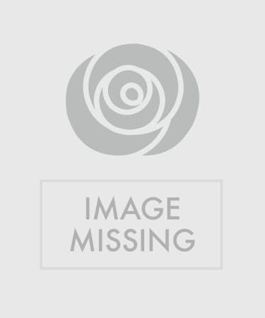 Simply Striking Sunflower Bowl Floral Arrangements Beneva