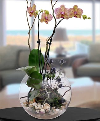 Orchid and Succulent Single Garden