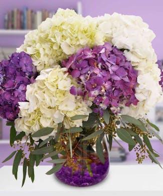Posh Purple