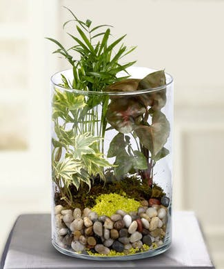 Garden in a Glass
