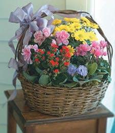 Garden Basket of Blooming Plants
