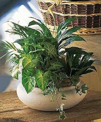 Ceramic Dish Garden Planter