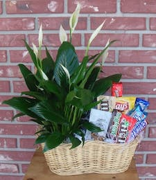 Plant and Snacks basket