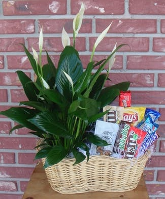 Plant and Snacks basket