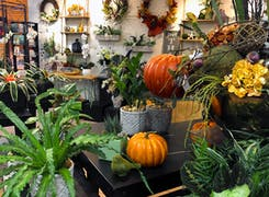 Seasonal plants and gifts on display in our south Sarasota location